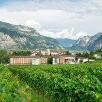 Navicello Bianco BIO • Vigneti delle Dolomiti IGT • Fondazione Mach • 6 bottiglie • SPEDIZIONE GRATUITA