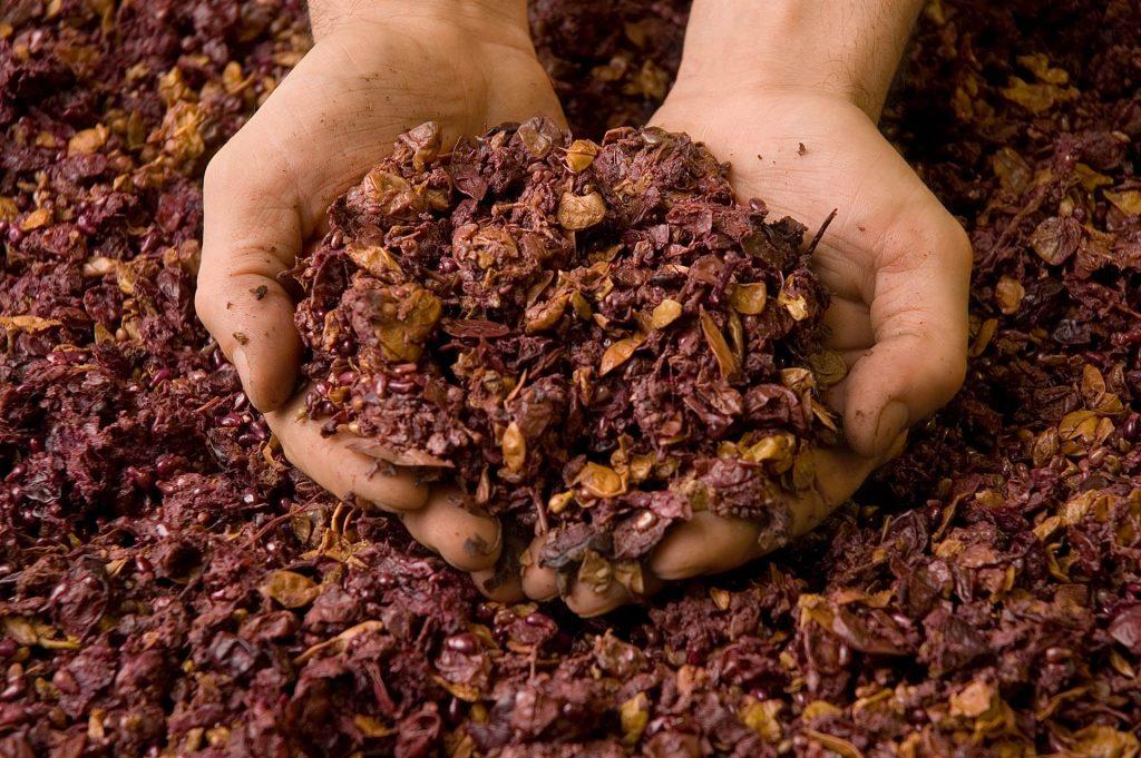 La vinaccia (cioè la buccia dell'uva) è la materia prima più importante quando si parla di grappa.